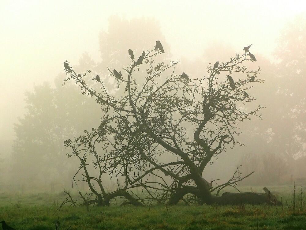 Nebelkrähen