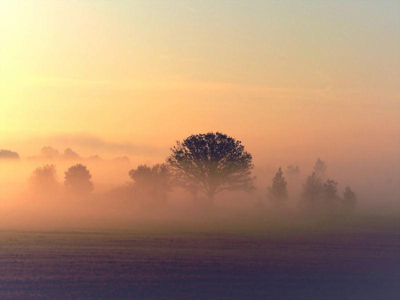Nebellandschaft bei aufgehender Sonne