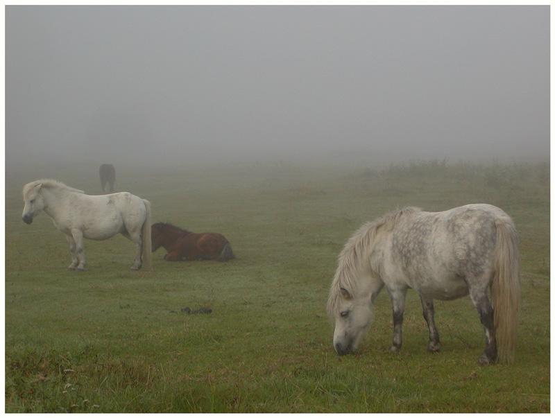 Nebelminis