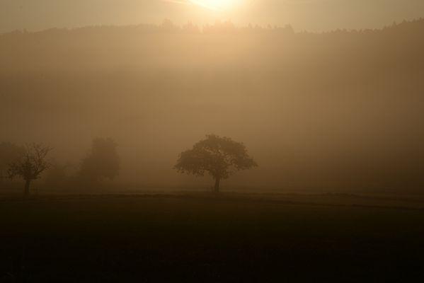 Nebelmorgen....