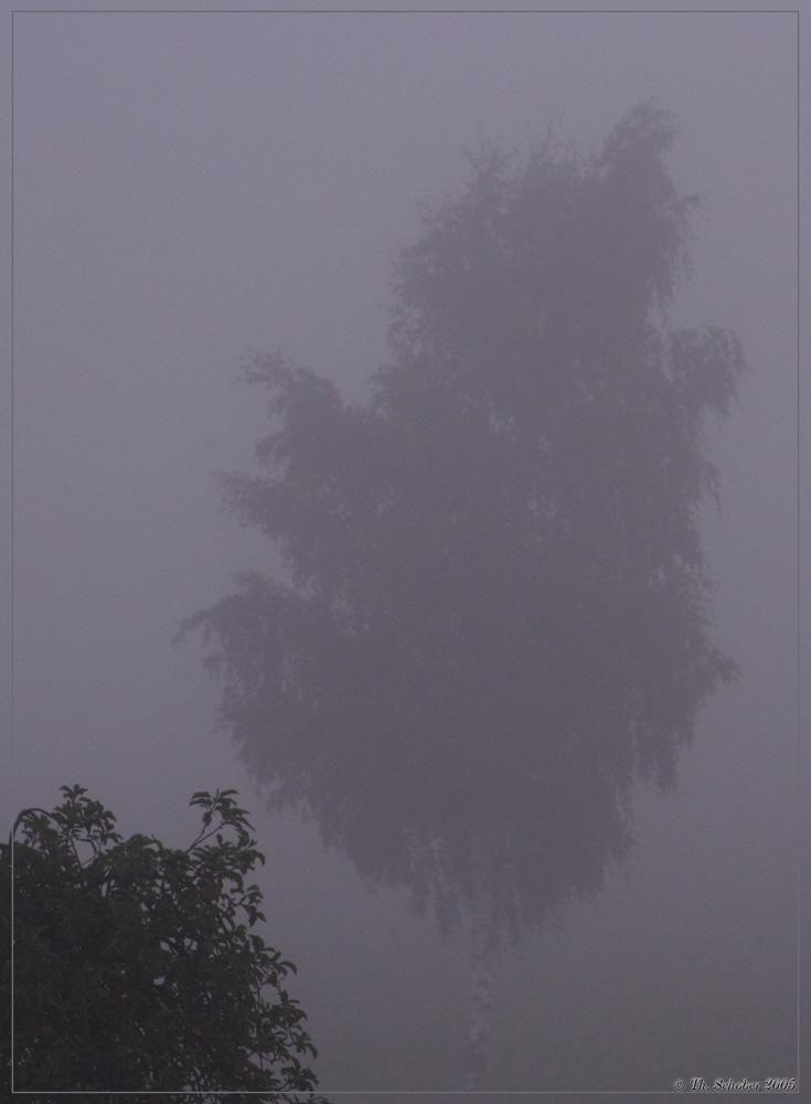 """""""Nebelmorgen"""""""