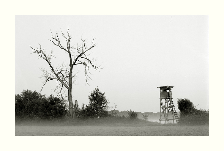 Nebelmorgen III