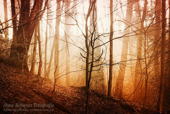 Fotograf Neunkirchen Seelscheid schwarz fotografie fotos bilder fotografin aus