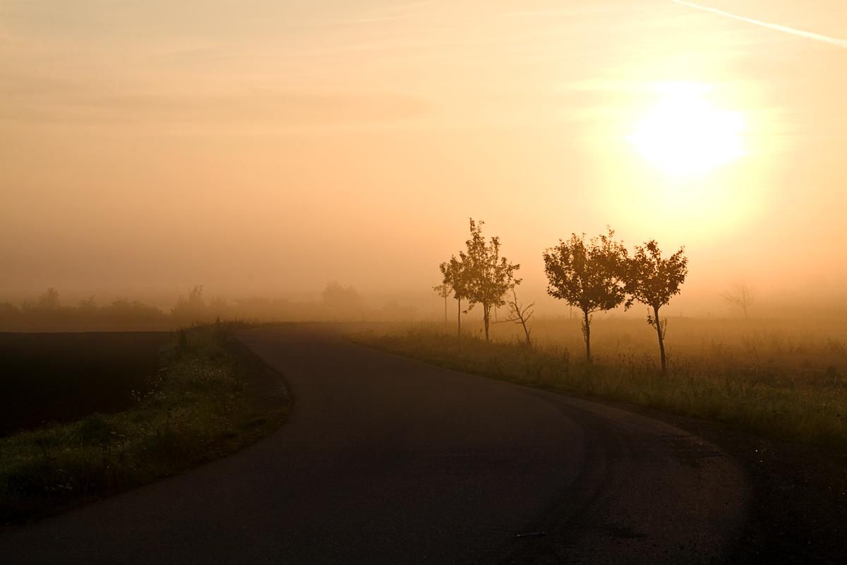 Nebelpfad