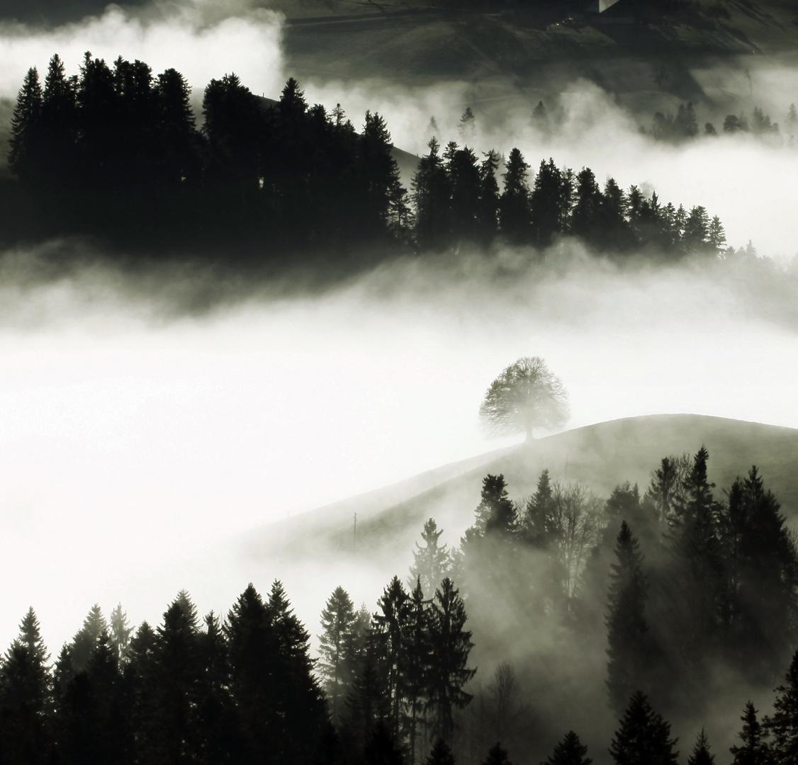 Nebelschleier Hügelland