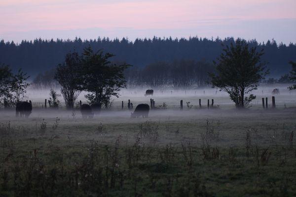 Nebelschwaden in Holstein