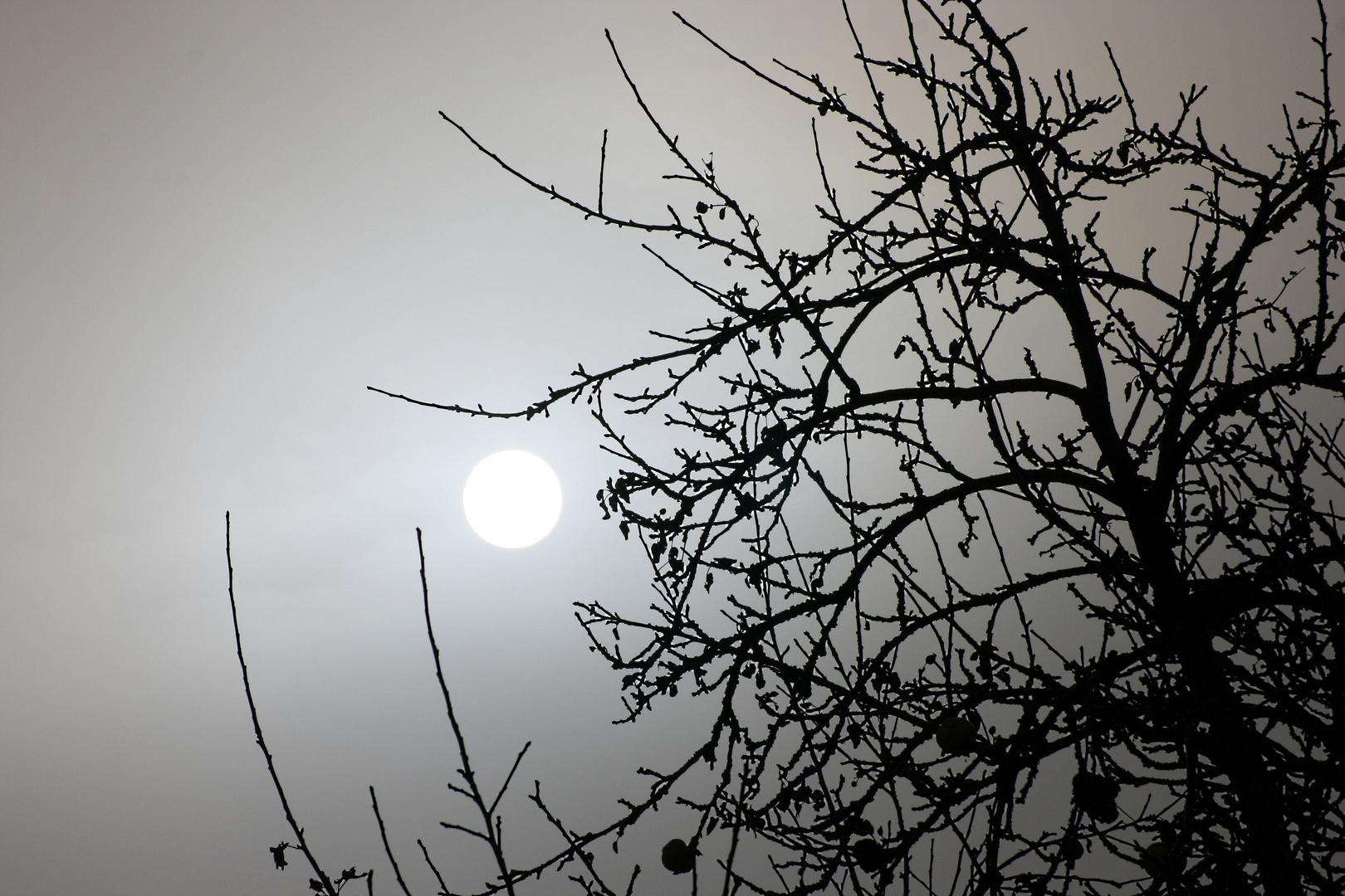 Nebelsonne a