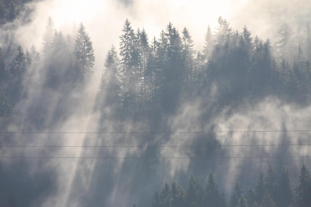 Nebel_Sonne_Schatten