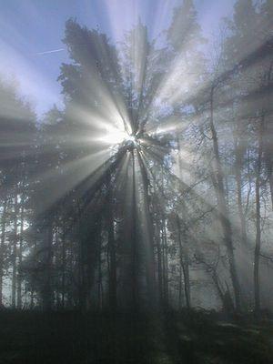nebelspiel mit den bäumen