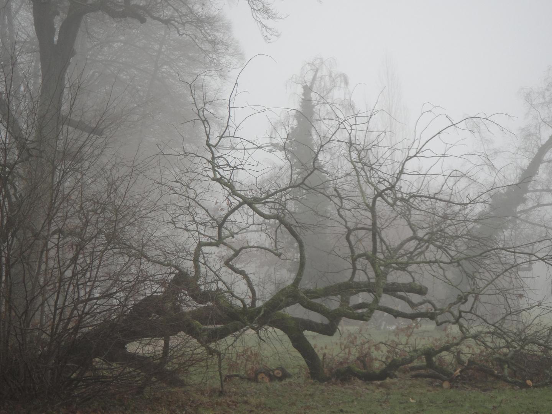 Nebelspuk