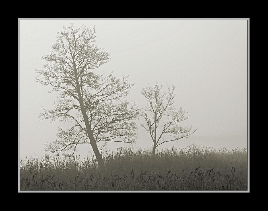 Nebelstimmung am Hartsee 3