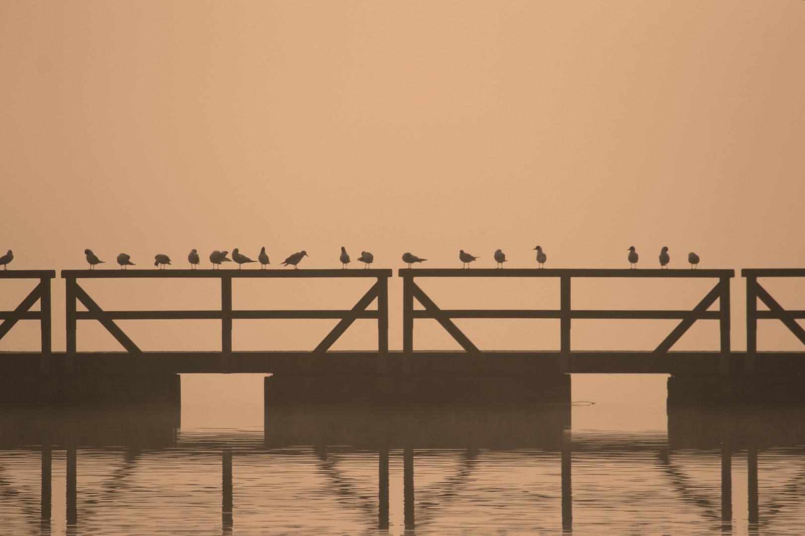 Nebelstimmung am Seeburger See, Sonntag morgen,Möven auf dem Steg