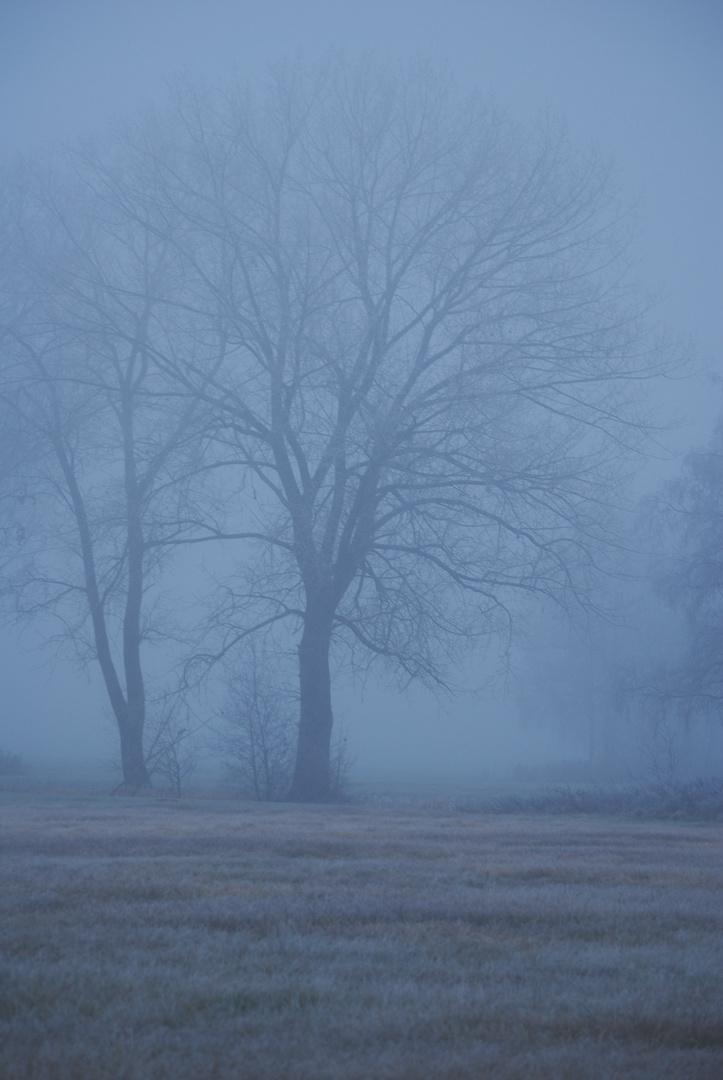 Nebelstimmung I