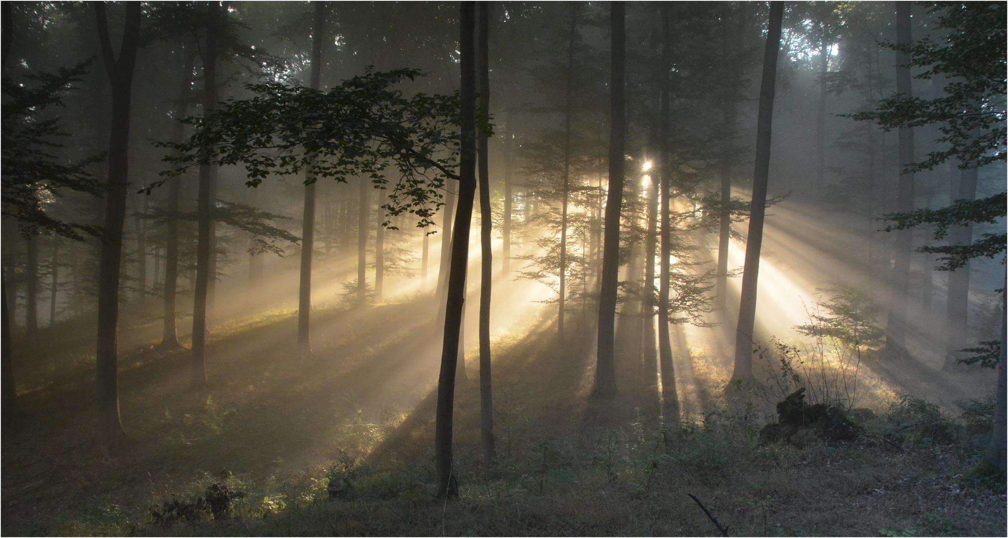 Nebelstimmung im Buchenwald II.
