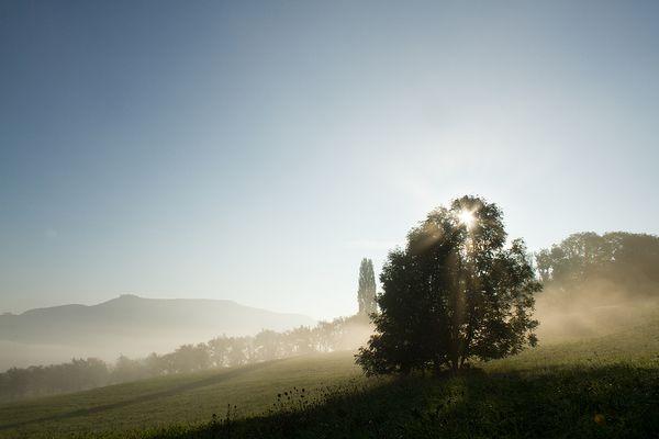 Nebelstimmung in der Frühe