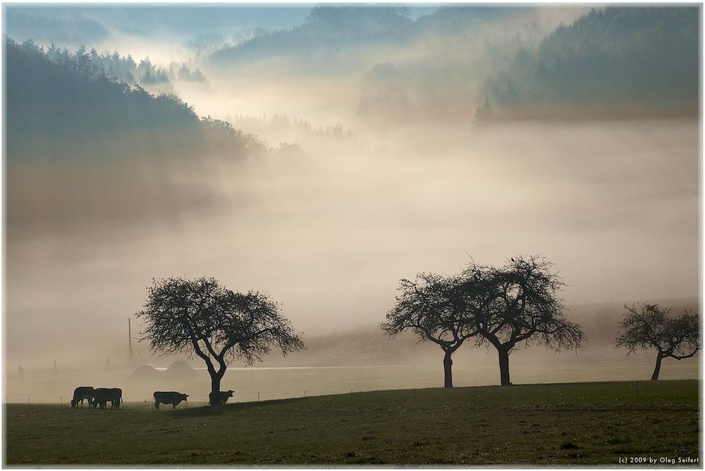 Nebelstimmung mal am Morgen