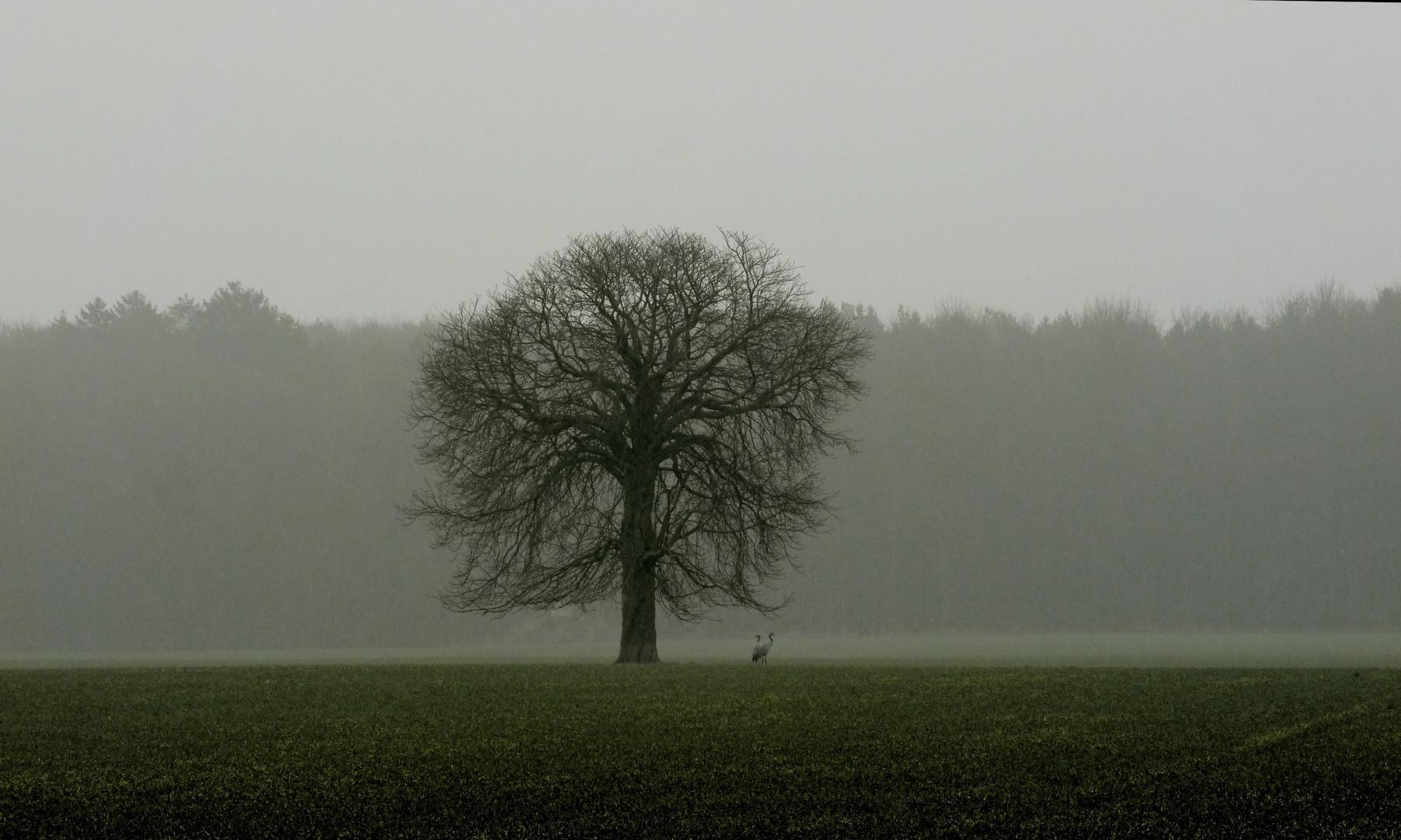 Nebelstimmung mit Kranichen