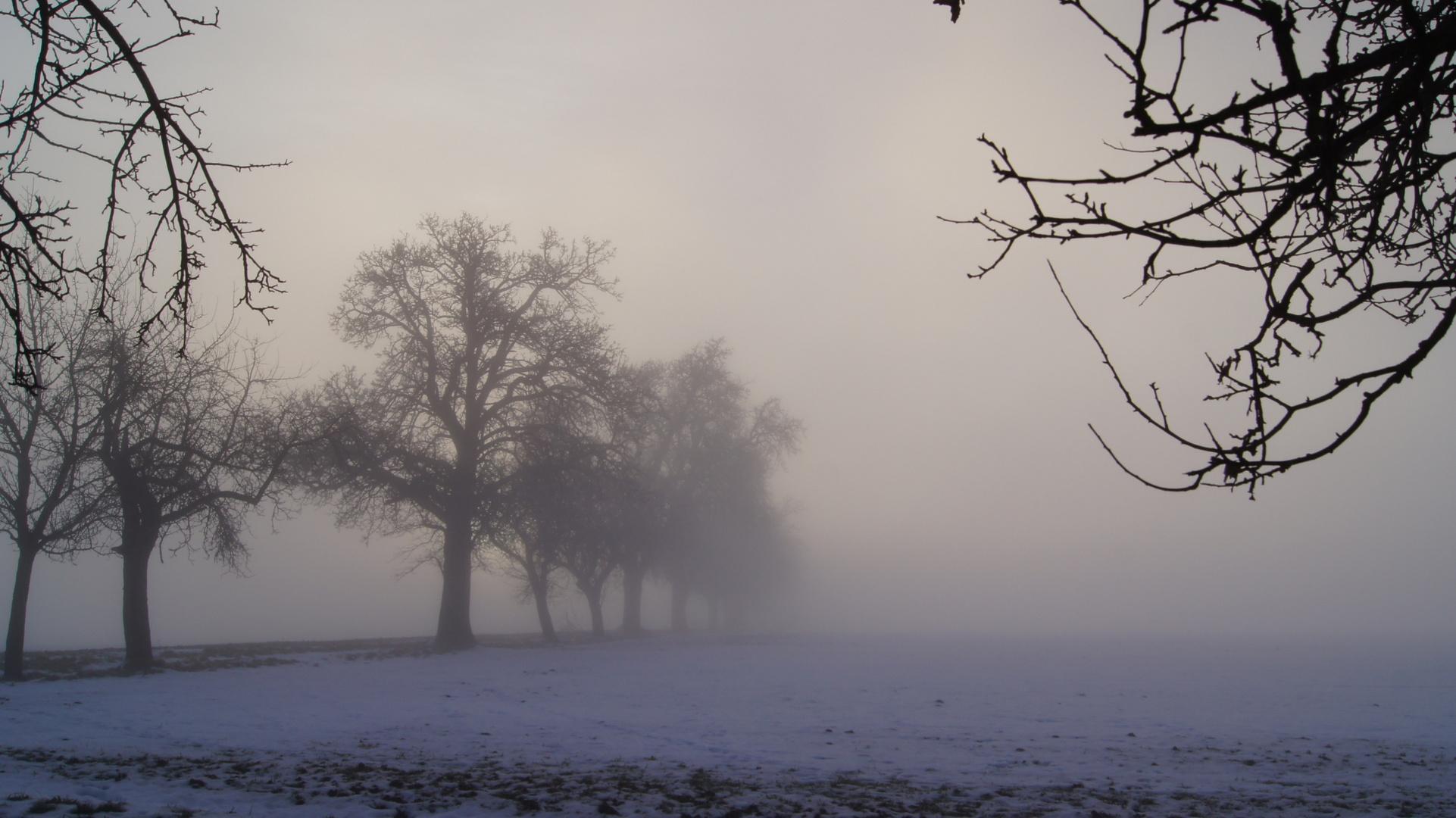 Nebelsuppe