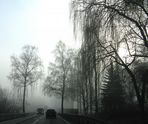 Nebeltage im November - Fog day in November