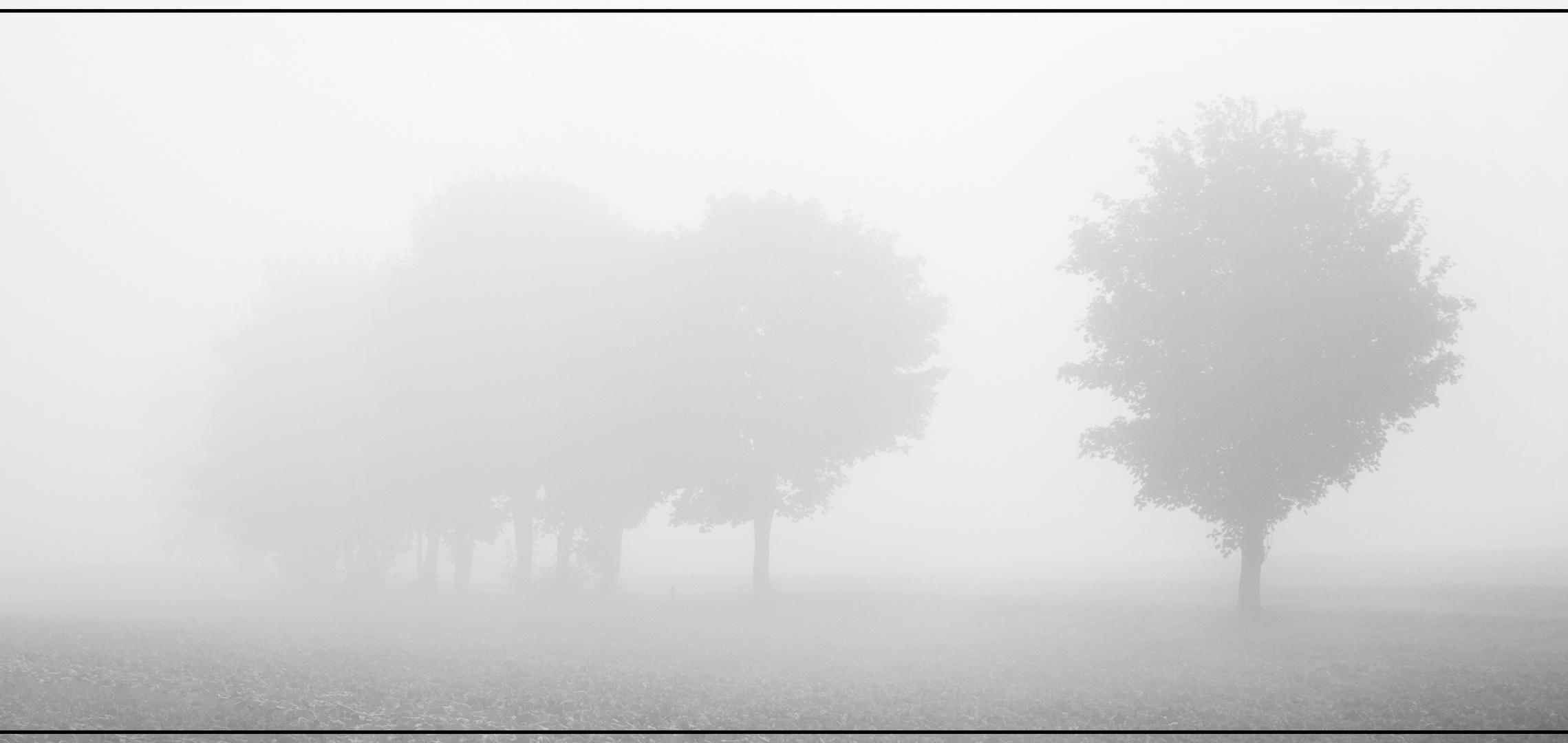 Nebelung