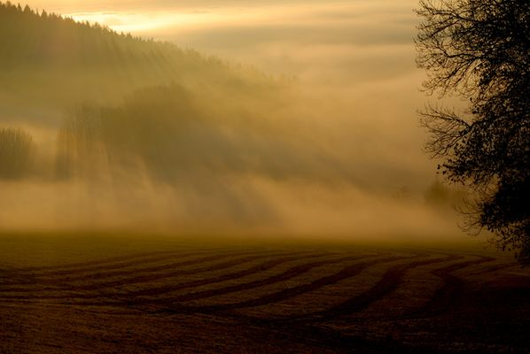 Nebeluntergang