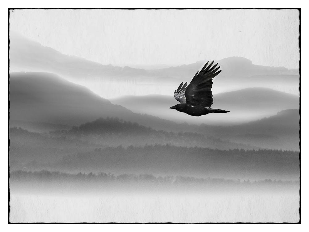 Nebelvogel