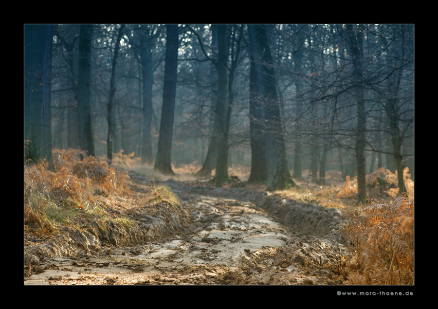 Nebelwald [2]