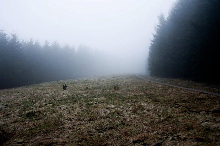 Nebelwald 2