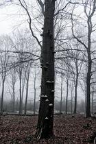Nebelwald 3