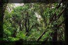 Nebelwald Costa Rica