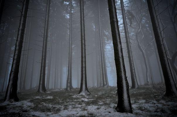 Nebelwald im Teuto