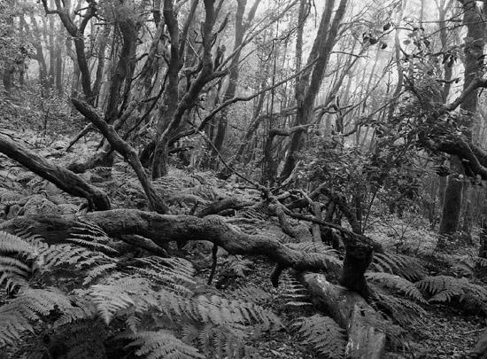 nebelwald la gomera