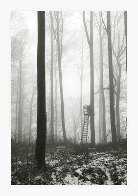 Nebelwald - Spaziergang mit Hund VII