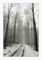 Nebelwald - Spaziergang mit Hund VIII