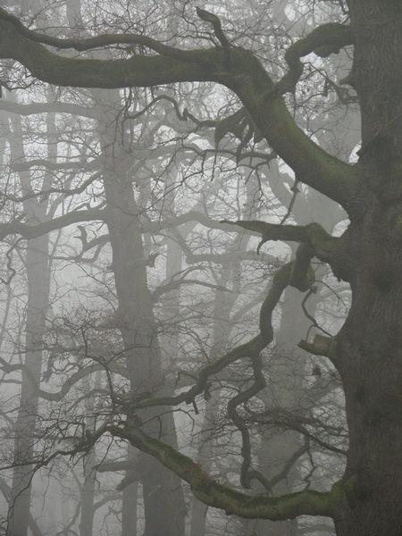 Nebelwald - Stille in Pseudo-s/w