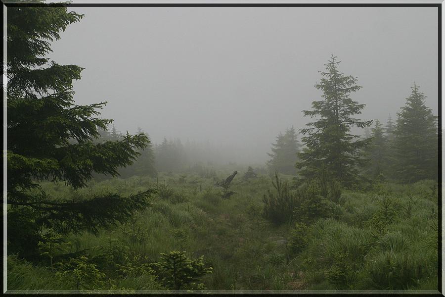 Nebelwaldlichtung