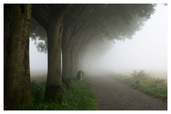 Nebel_Weg