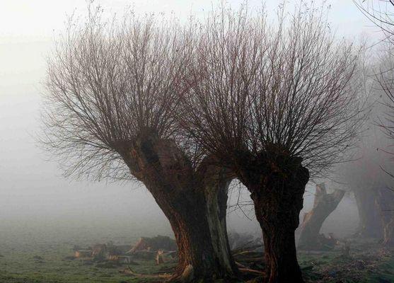 Nebelweiden