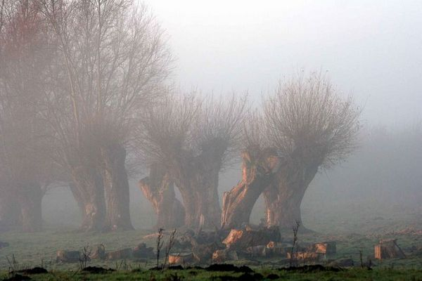 Nebelweiden II