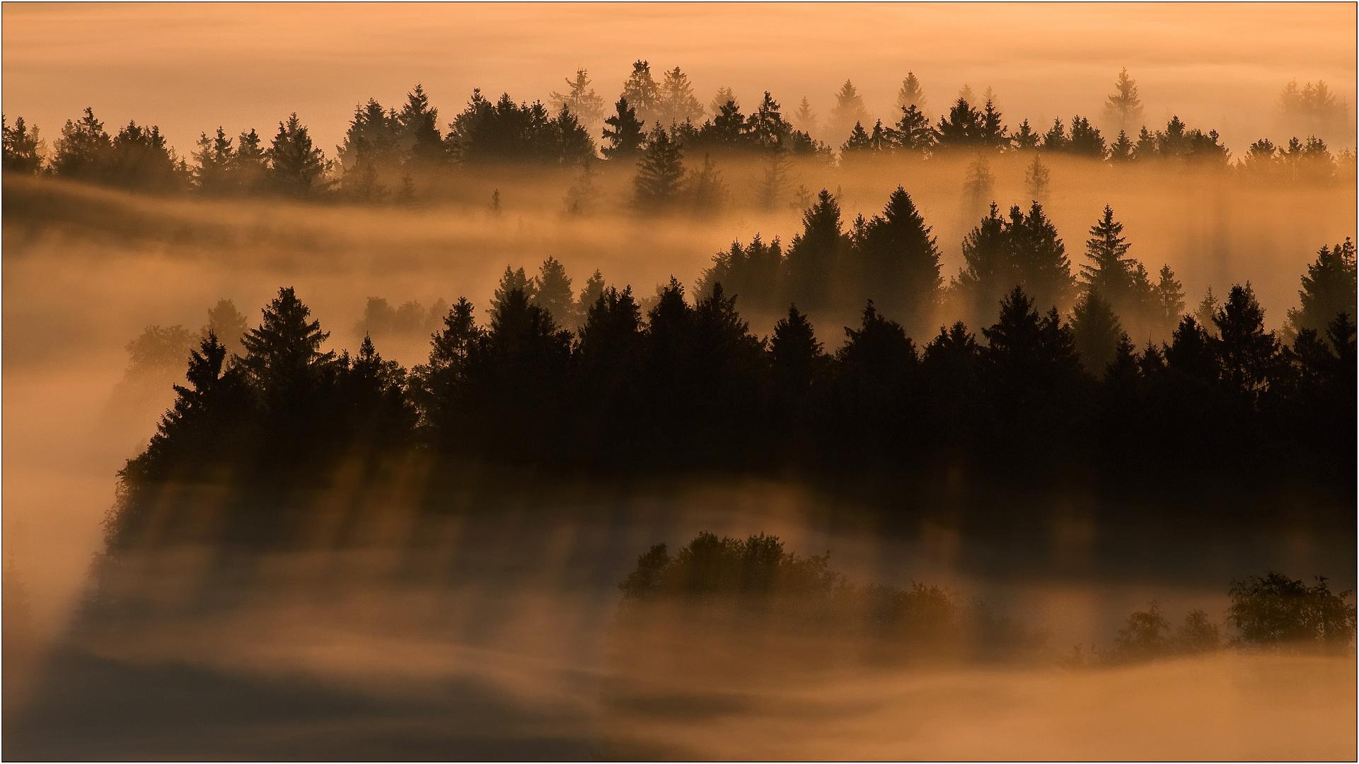 Nebelwelt #4
