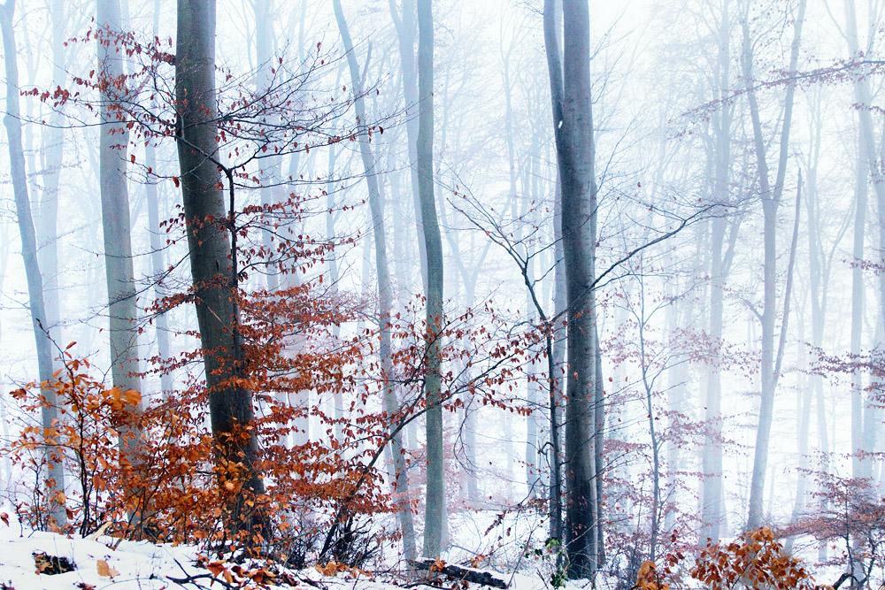 ...Nebelwelt...