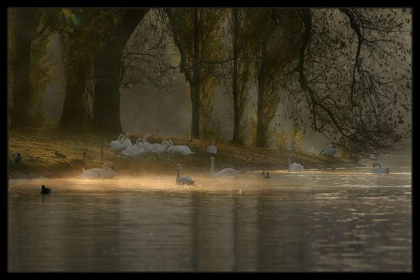 Nebelwelt V