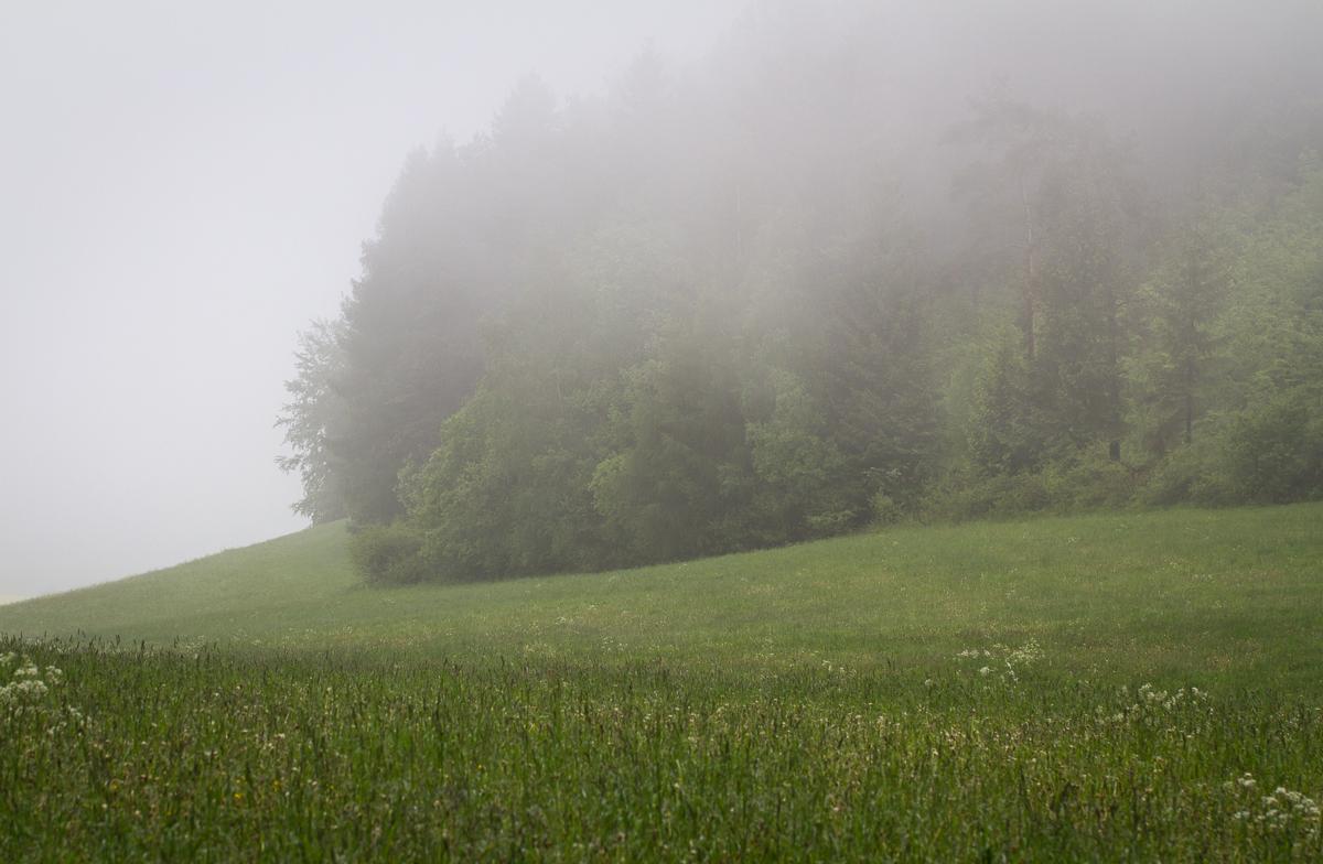 Nebelwiese