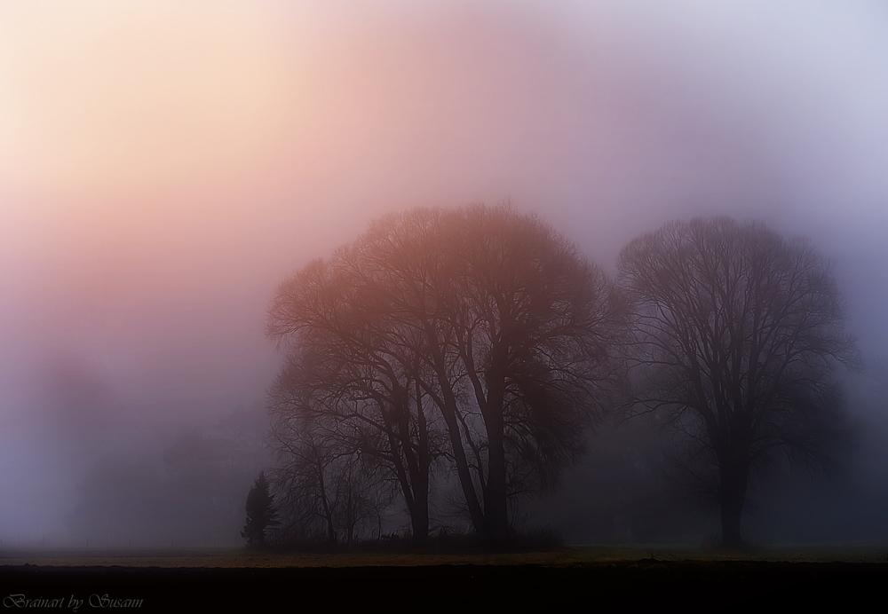 Nebelwinter
