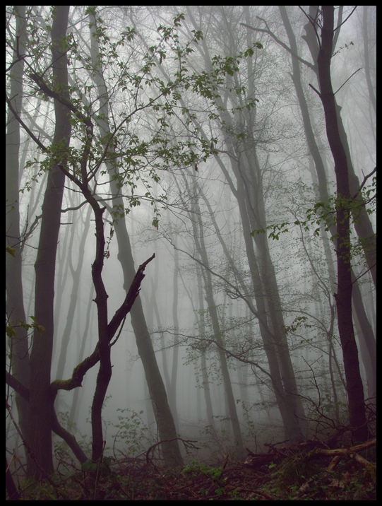 .Nebelwogen.