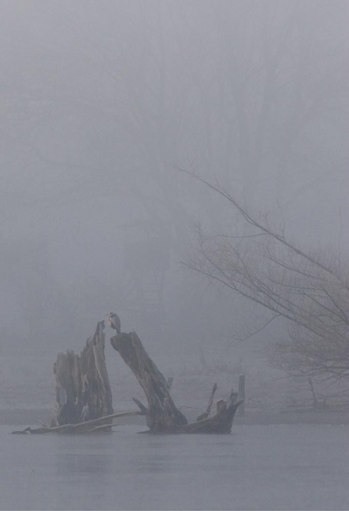Nebelzauber - jetzt mit Beschnitt