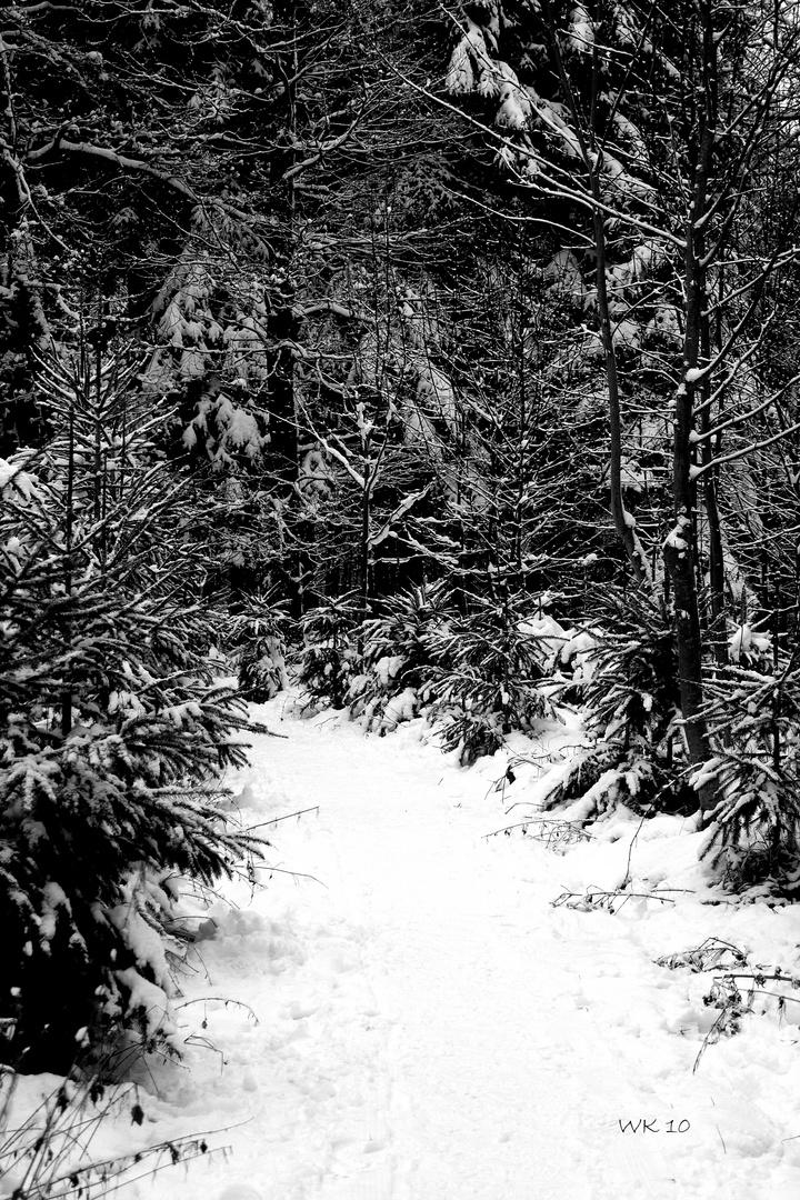 Nebliger Wintertag - 2