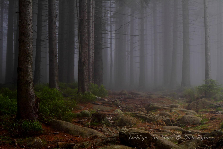 Nebliges im Harz
