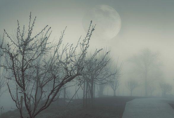 """"""" Neblinas """" 12"""