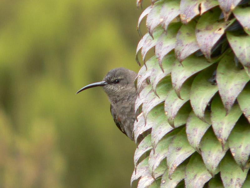 Neckischer Vogel